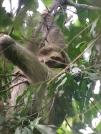 Sloth action during our nature hike